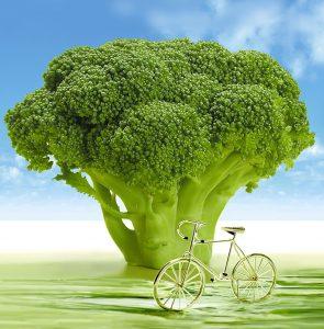 BroccoliFiets-694304